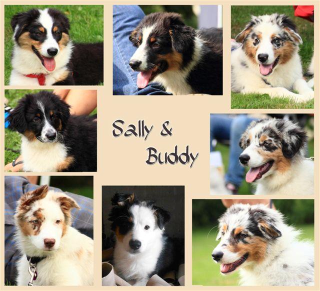 Fotocollage gemaakt door Emily van de 8 puppen met hun 17 weken