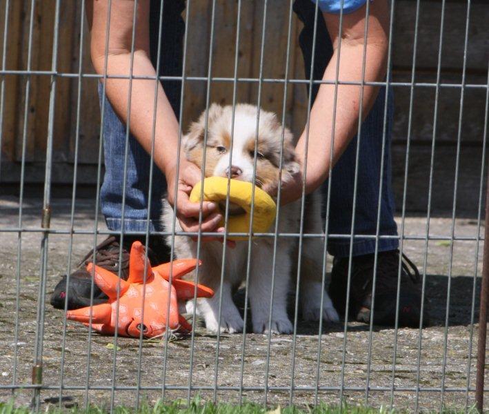Foster tijdens de puppentest