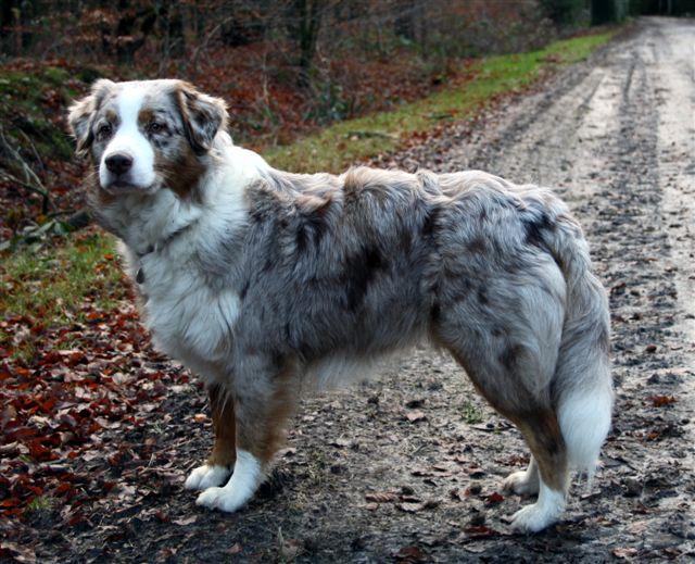 Sally tijdens een wandeling op 18-12-2011