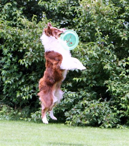 Jess-Lyn (14 mnd.) vangt de frisbee uit de lucht