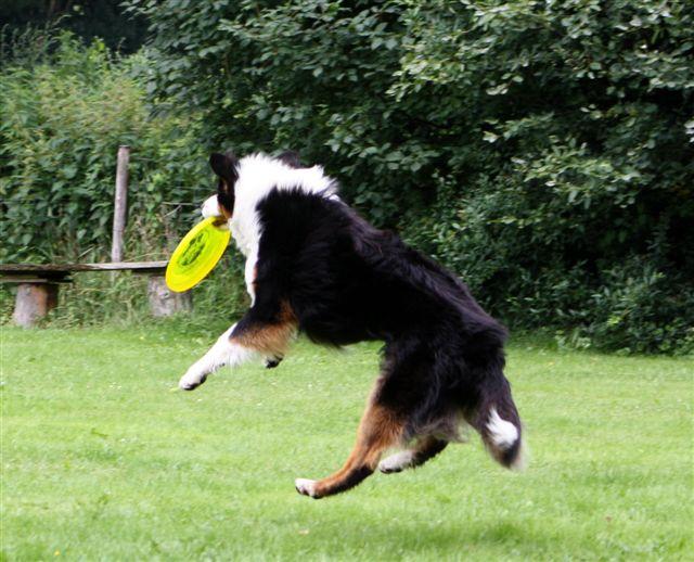 Keb-Mo (14 mnd.) vangt de frisbee vol verve
