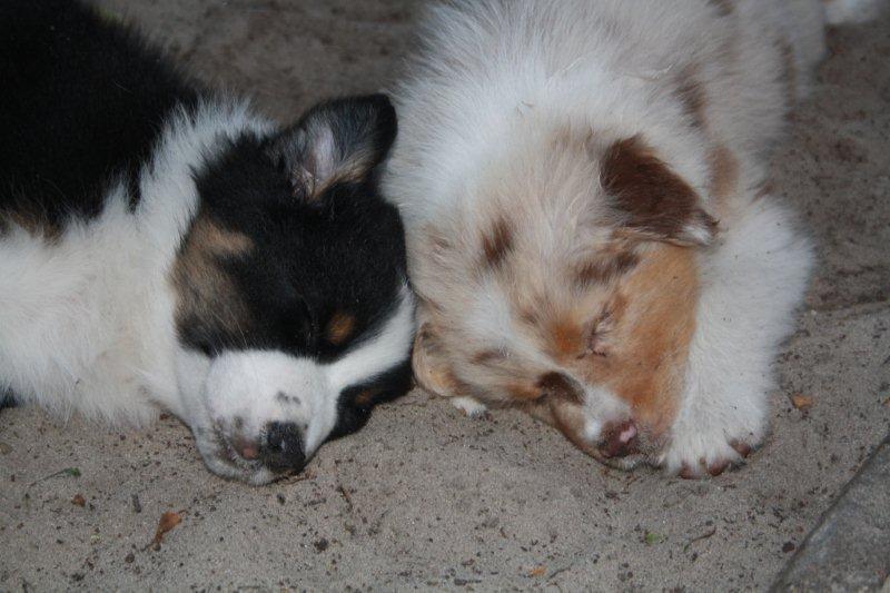 Bailey en Rocky