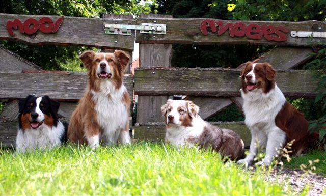 Keb-Mo, Baloe, Sally en Jess-Lyn