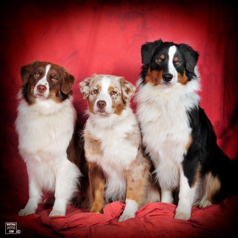 Beste teef, BOB Jess-Lyn, mamaSal en beste reu Keb-Mo. Mei 2012
