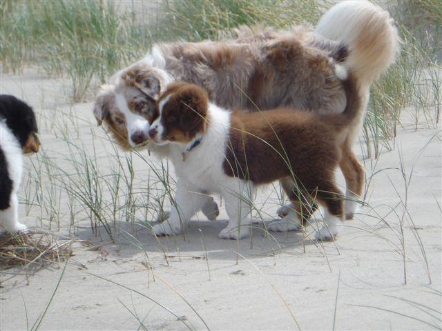 Hier ben ik 9 weken oud en voor het eerst op vakantie; strand, zee en duinen!