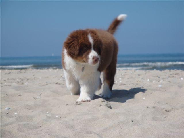 Het was fijn op het grote strand