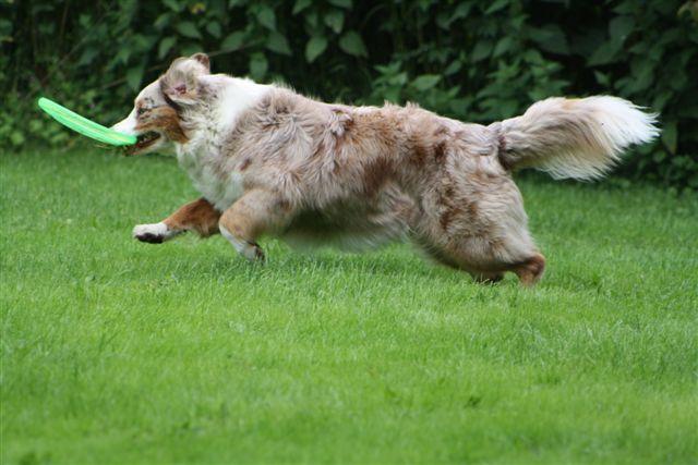 Sally pakt de frisbee uit de lucht