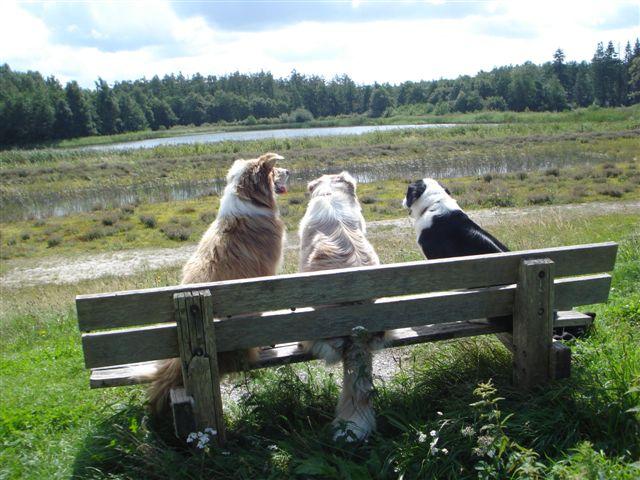 3 kleine kleutertjes (Baloe, Sally en Sjors)