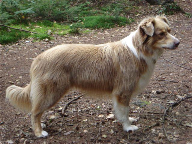 Baloe is hier vier en een half jaar (2007)