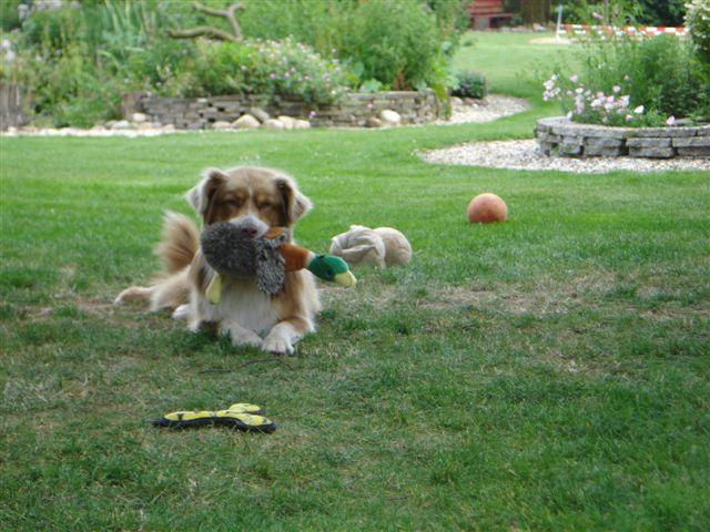 Heerlijk met een zachte speel in de bek in de tuin, genieten!