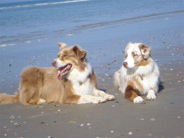 Baloe en Sally op het strand